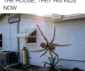 funny, lol, and spider image