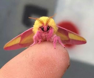 moth, animal, and cute image