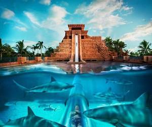 shark and travel image