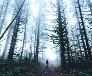 alone, forest, and nature image