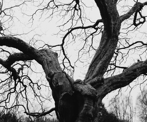 black and white, varnuak, and branches image