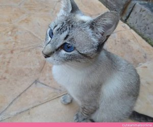 cats, kittens, and cute cats image