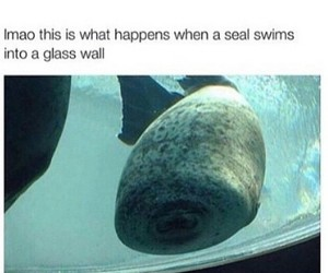 funny, seal, and lol image