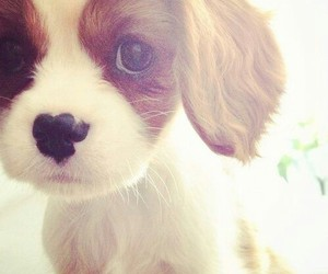 puppy, sweet, and cute image