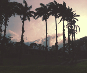 background, palms, and iphone image