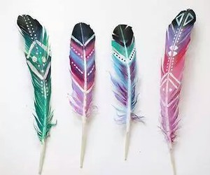 feather and colors image