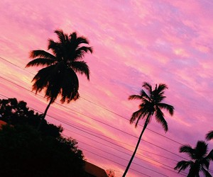 palm trees, pink, and sky image