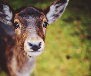 animal, animals, and doe image