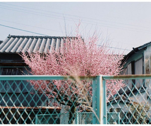 japan, photography, and tree image