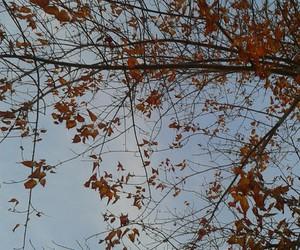 arbol, naturaleza, and otoño image