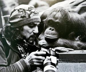 monkey, photography, and animal image