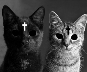 black and white, cats, and cross image