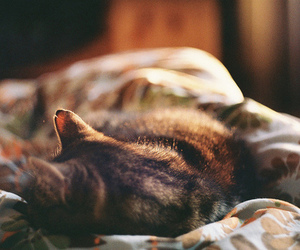 cat, sleep, and animal image