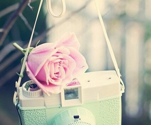 camera, rose, and vintage image
