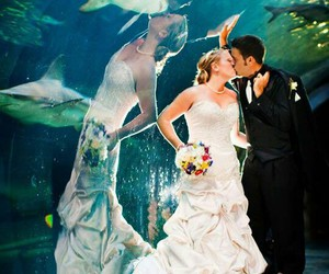 funny, shark, and wedding image