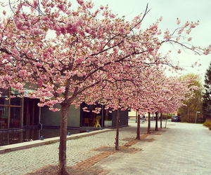 beautiful, flowers, and sweden image