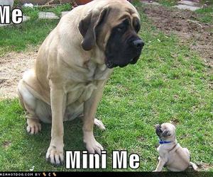 dog, mini me, and cute image