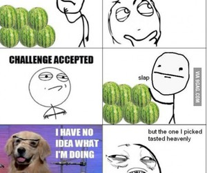 delicious, fruit, and funny image