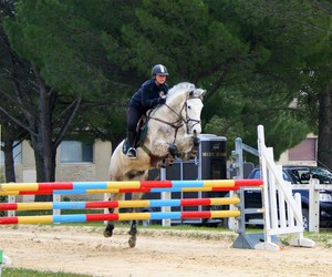 cheval, chevaux, and competition image