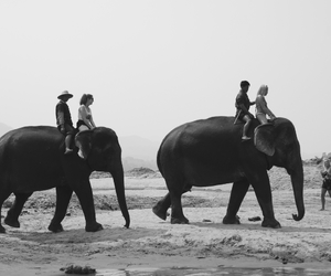 adventure, black, and black and white image