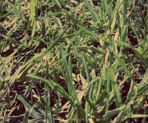 grass, green, and natural image