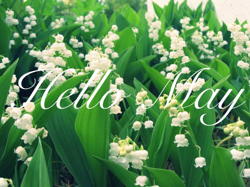 Cool white flowers in may photos wedding and flowers ispiration hello may discovered by vanille vct on we heart it mightylinksfo Choice Image