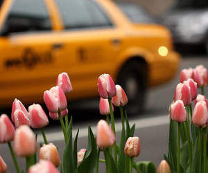 flowers, tulips, and taxi image