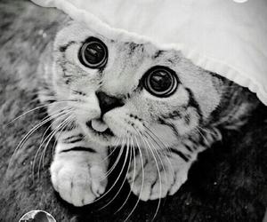 black, tumblr, and cat image