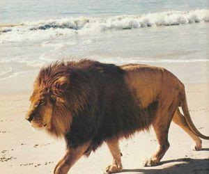 lion, beach, and animal image