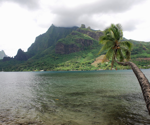 nature, Island, and green image