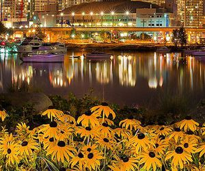 city, light, and flowers image