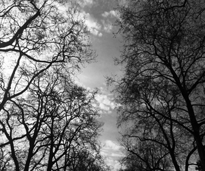 black and white, Hyde Park, and london image