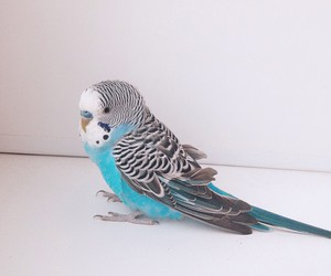animals, blue, and color image
