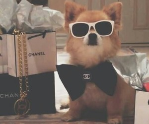 chanel, dog, and puppy image
