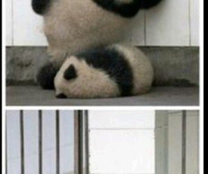 falling, funny, and panda image