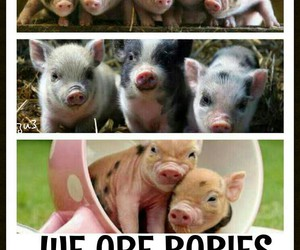 babies, piglets, and pigs image