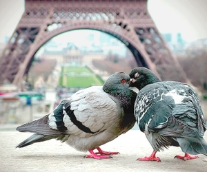 love, paris, and bird image