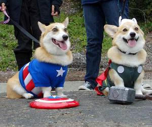 Avengers, dogs, and superheros image