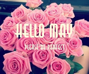 flower, spring, and hello may image