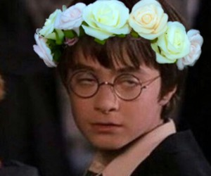 flowers, funny, and harry potter image