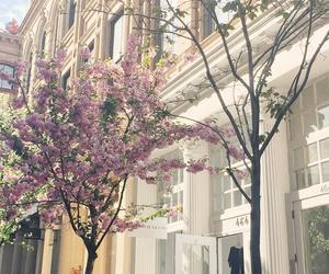 new york, tree, and nature image