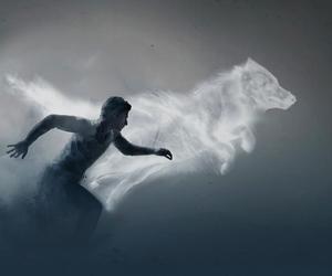 teen wolf, wolf, and scott mccall image