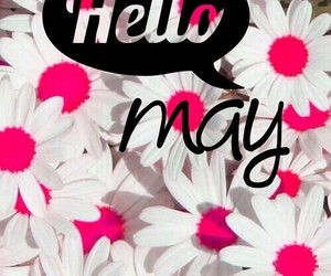 flowers, hello may, and pink image