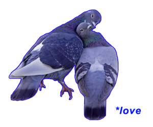 hate, pale, and pigeons image