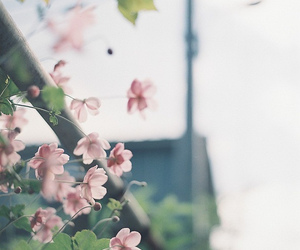 film, flowers, and flower image