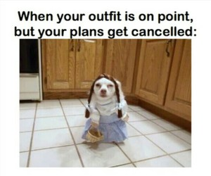 funny, lol, and plans image