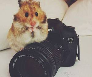 hamster, camera, and canon image