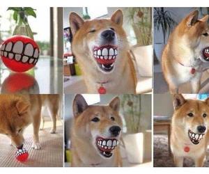 dog, funny, and ball image