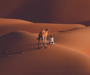 arab, camel, and desert image