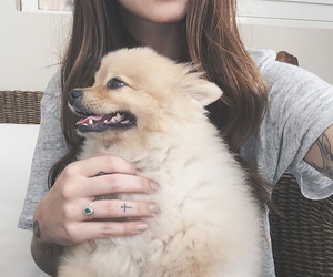 pomeranian, dog, and cute image